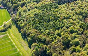 Luftaufnahme eines dichten Waldes