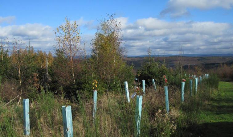 Lauter neugepflanzte Bäume in ihrer vollen Pracht
