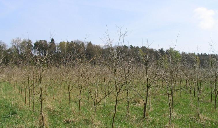 Eine Reihe neu gepflanzter Bäume