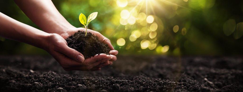Eine Person hält in ihren Händen Erde mit einer Baumknospe